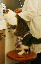 Cooking With the Cat by vanitycat