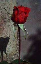 Una rosa para Emily (Wiliam Faulkner) by carolinablanco754570