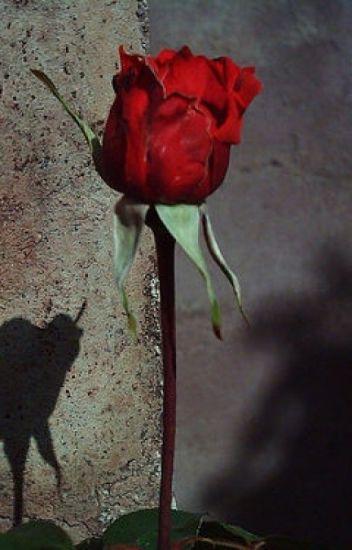 Una Rosa Para Emily Wiliam Faulkner Carolinablanco754570 Wattpad