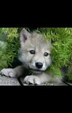 Neko Wolf pup (Blue exorcist) by swagamuffin30