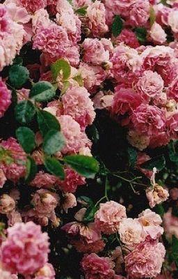 Người yêu hoa
