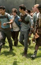 Maze Runner Imagines by eatingoldcheese
