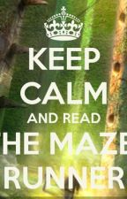 Maze runner x readers by tasha8389