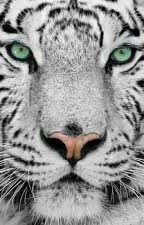 Le Tigre Blanc by vito14