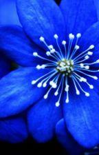 Floarea noptii  albastre by marileehyesoo