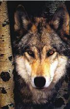 Werwölfe sind unter uns by Violetta_wolf