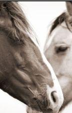 Nakota (horse story) by AngelKissedXX11