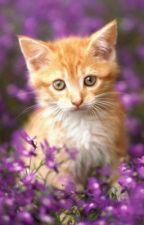 Warrior Cats: Tribe Generator/Help by Frostwolf27