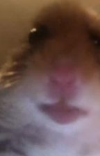 Faded Albums - An Ereri fanfic by im_a_tardis_girl