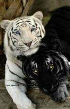Tiger by tacocheezin