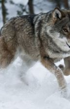 Wolf of death by De4dkiller