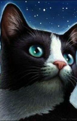 Warrior Cat Generator - CLAN GENERATOR: Favorite Pokemon ...