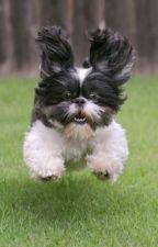 jump the dog by Kaitlyn_Da_Kitty
