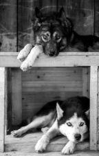 El lobo con el husky (yaoi) by Jayden_alexander