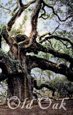 Old Oak by stormvisions