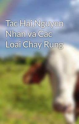 Tac Hai,Nguyen Nhan va Cac Loai Chay Rung