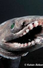 The Adventures of Keiko Haubjed - Frilled Sharks by Tsunami_Holmes