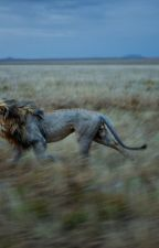 The Lion in my dream. by FuriousPapaya