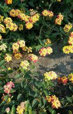 Flower power (OHSHC fanfic) by Crazycatflower