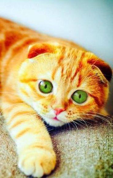 Street cat (boyxboy)