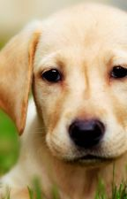 My own top 5 most cutest dog breeds by igot1less1lessproble