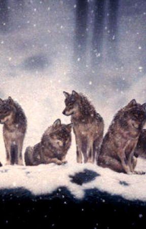 Alpha Wolf by JeffersonTheHatter