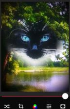Cats of the clans by biddy505