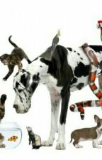 """cuando los animales salvaron  al mundo """" by delfadirectioner1d"""