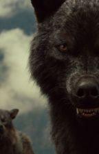 Im Auge meines Wolfes (Sam Uley FF) by xxxbrOKenxxxgirlxxx