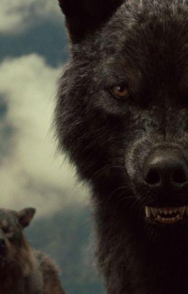 Im Auge meines Wolfes (Sam Uley FF)