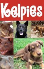 Kelpies by footymoo