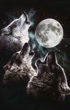 Werewolf RP {Active.} by Aoi_Kaze