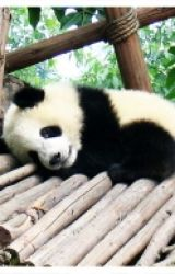 Pandas by Kittens4all