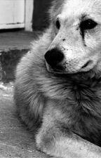 La vida de un Perro by scxrl3tt_