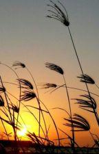 Matahari untuk senja. by ssnoowmoon