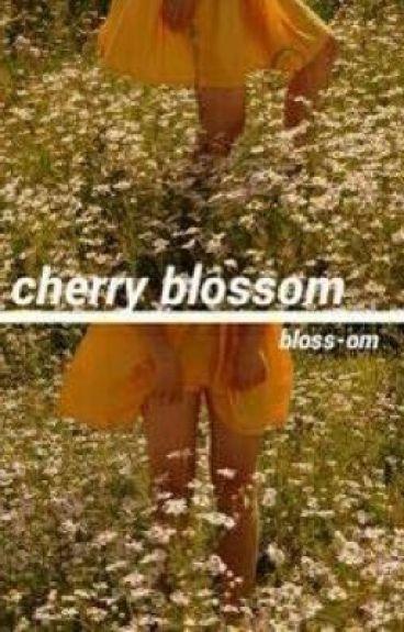 cherry blossom // h.s