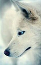 The White Wolf ( Derek Hale Love Story) by Dat_AthRojas