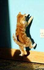 [trans] Mèo nhỏ - Jark GOT7 by GreenTea1994