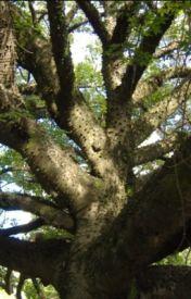 Branches by WeirdCrazyFun