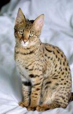 Warrior Cat Name Generator by snake04398