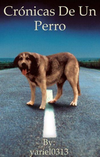 Crónicas de un perro
