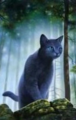 Warrior Cats Bluestar S Life Story On Hold