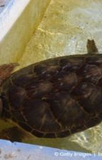 Harvey the Turtle by percyjacksonlov