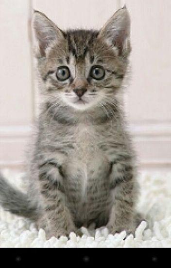 A Cats Documentary (A Kalanthony,TySune,Sophian,Jogan,and Evander.)