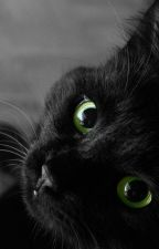 Love, Heartbreak and Cats( HICCSTRID FANFIC ) by ChloeKittykat