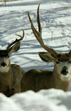 The Deer Hunter by trevorsedmonds