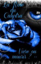 La Rose du Calystra by rachellessard