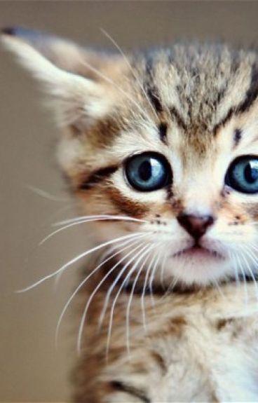 Kitten Shifter