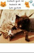 ~Cosas que no sabias de gatos~ by 5sossecrets1D