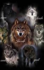 Twilight Wolf Pack Preferences by kelsimariah27